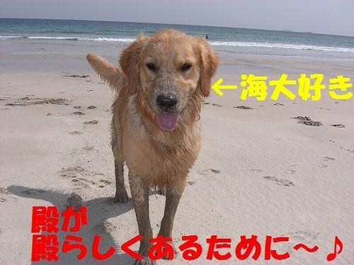 3_20111207202601.jpg