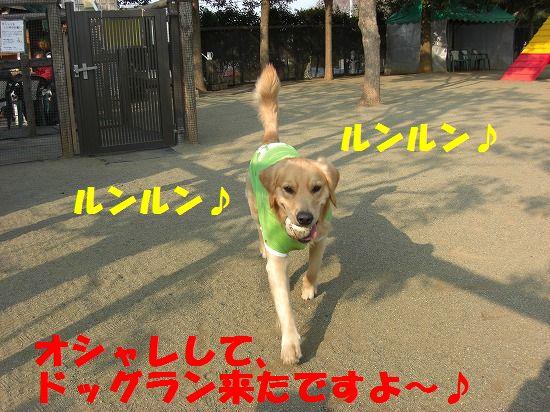 3_20111209203429.jpg