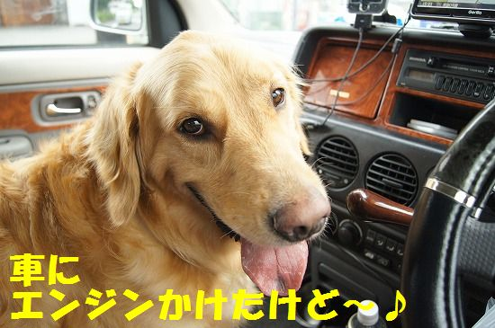 3_20111210205422.jpg