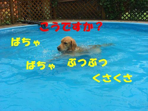 3_20111215204522.jpg