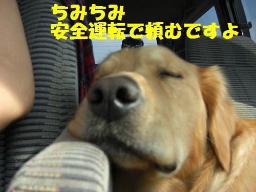 3_20111216203515.jpg