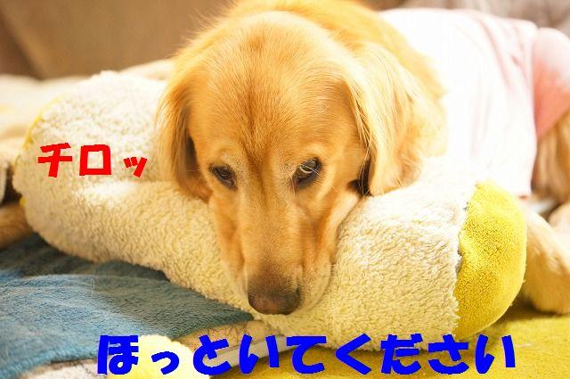 3_20120111204550.jpg
