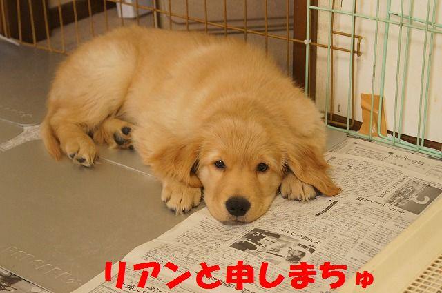 3_20120117221914.jpg