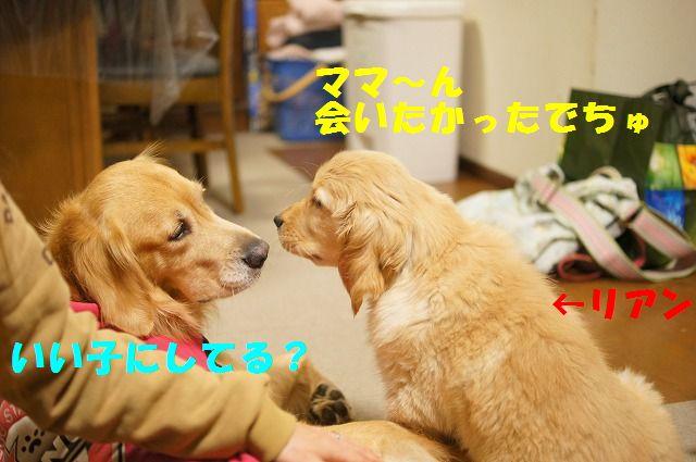 3_20120119222422.jpg
