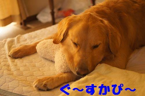 4_20111123224924.jpg