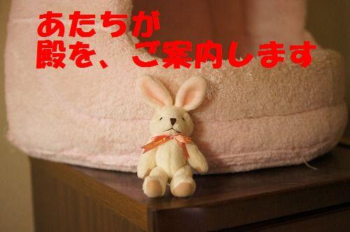 4_20111124224214.jpg