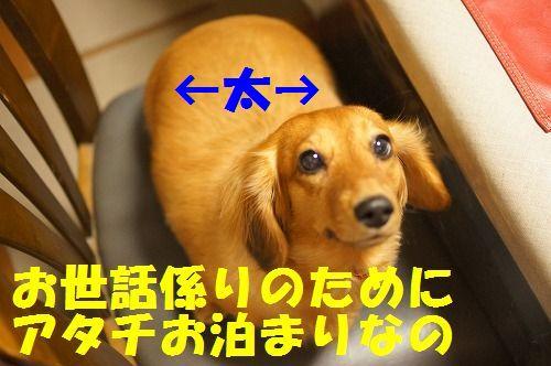 4_20111126194942.jpg