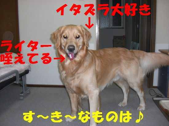 4_20111207193759.jpg