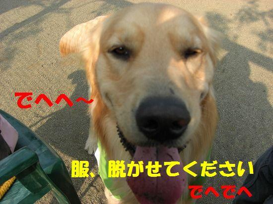 4_20111209203429.jpg