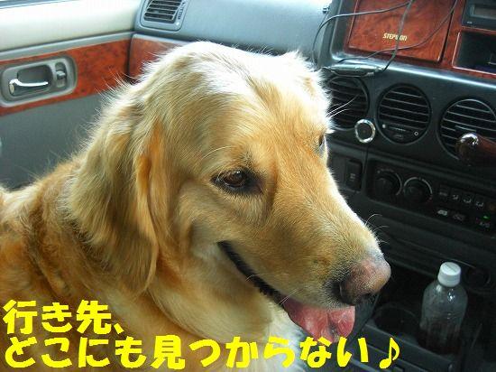 4_20111210205422.jpg