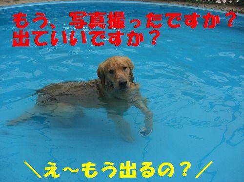 4_20111215204521.jpg