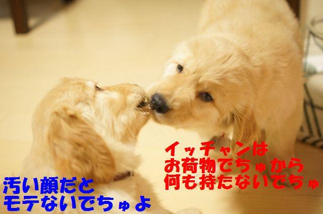 4_20120106201633.jpg
