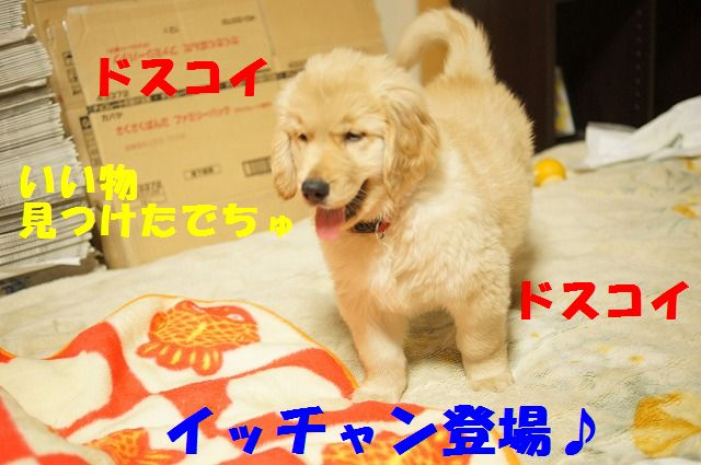 4_20120111204549.jpg