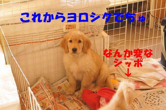 4_20120117221913.jpg