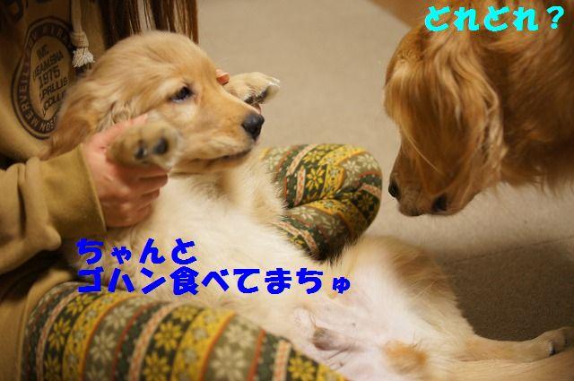 4_20120119222421.jpg