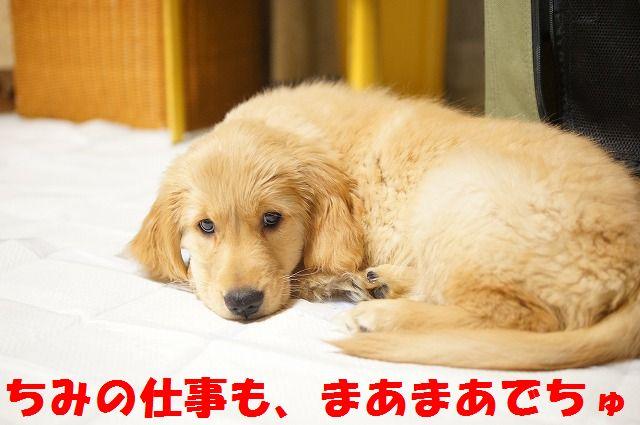 4_20120122230309.jpg