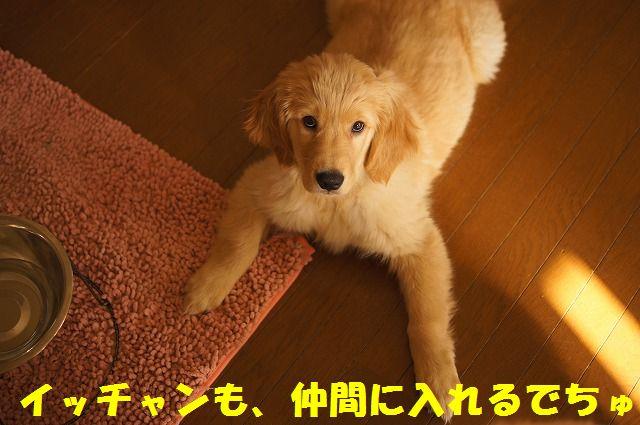4_20120123221731.jpg