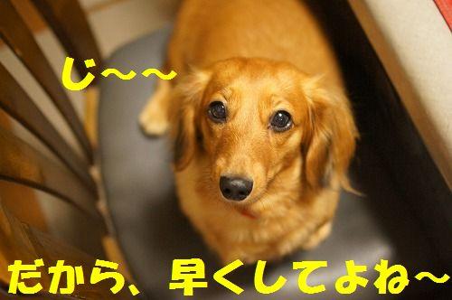 5_20111126194941.jpg