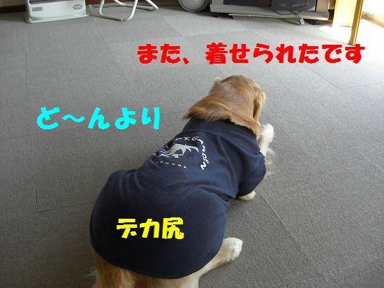 5_20111209203428.jpg