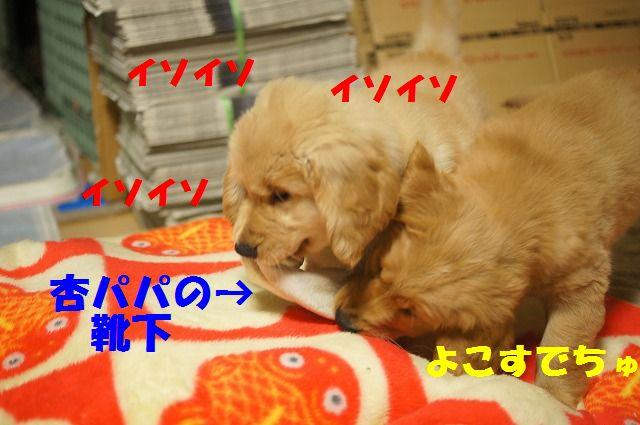 5_20120111204548.jpg