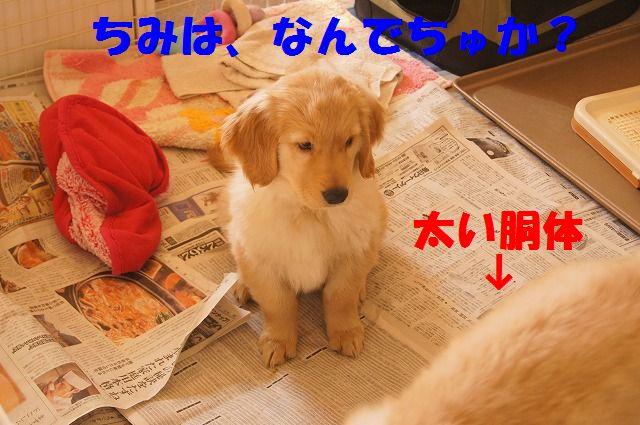 5_20120117221913.jpg