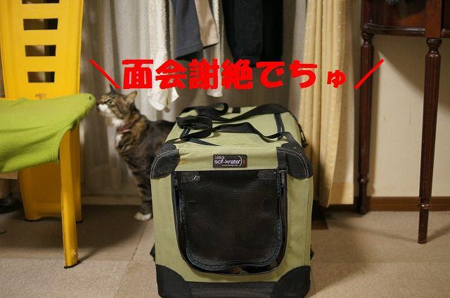 5_20120121224258.jpg
