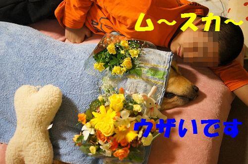 6_20111124224213.jpg