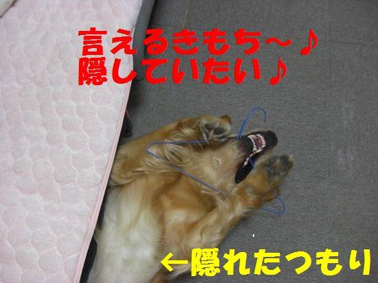 6_20111207193758.jpg
