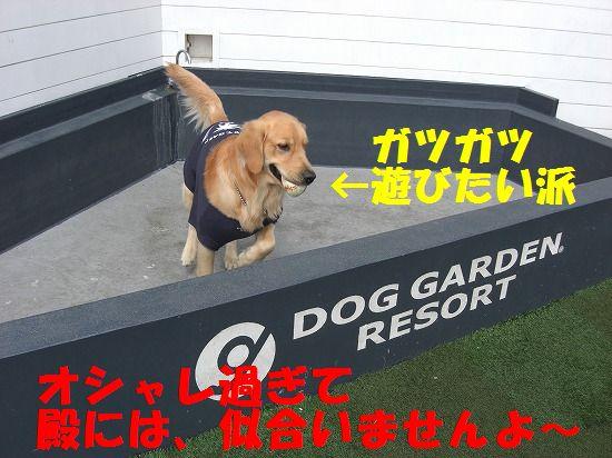 6_20111209203428.jpg
