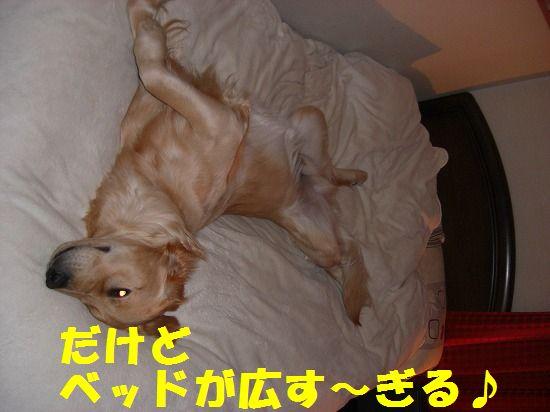 6_20111210205421.jpg
