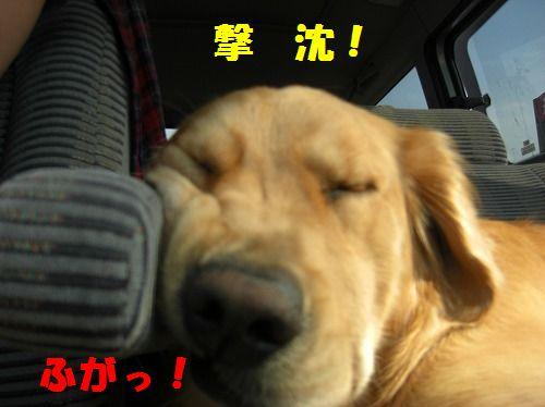 6_20111216203514.jpg