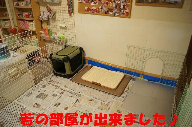 6_20120110213831.jpg