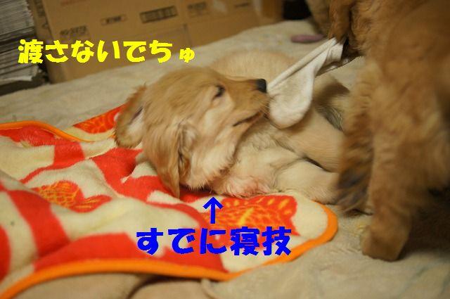 6_20120111204548.jpg