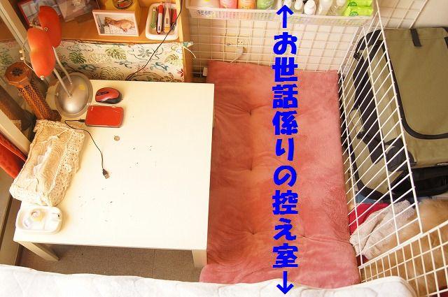 6_20120117221912.jpg