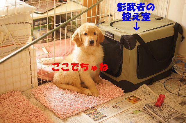 6_20120118203728.jpg