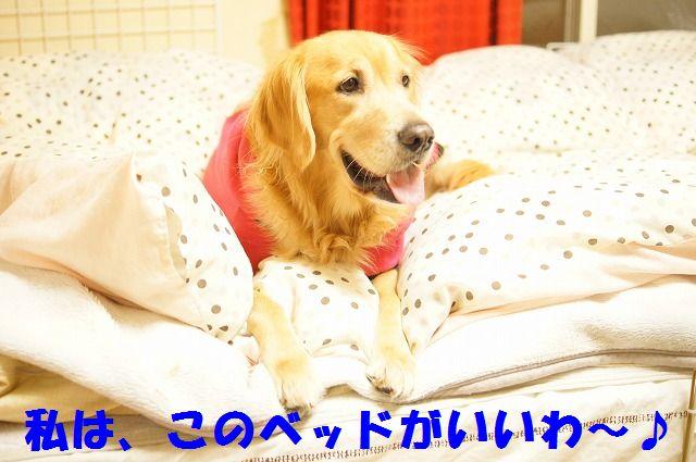 6_20120119222420.jpg