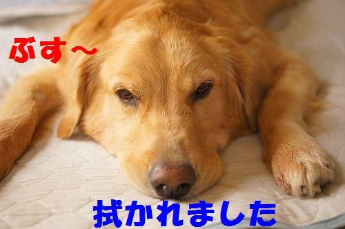 7_20111123224950.jpg