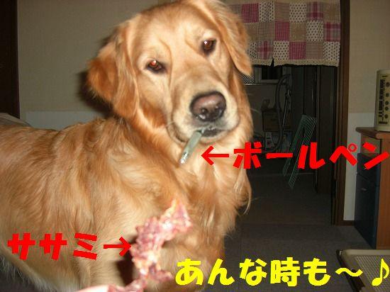 7_20111207193832.jpg