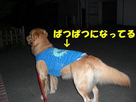 7_20111209203454.jpg