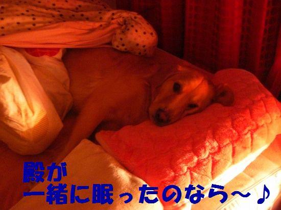 7_20111210205454.jpg