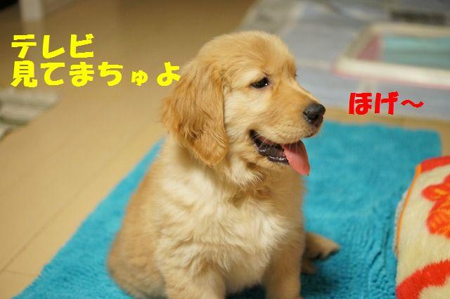 7_20120110213844.jpg