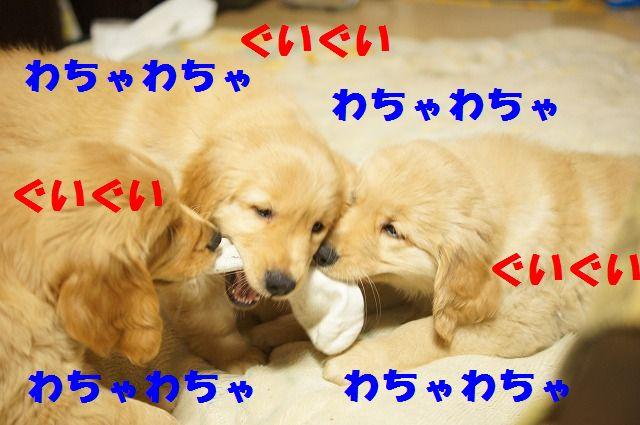 7_20120111204705.jpg
