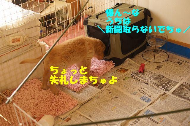 7_20120118203843.jpg