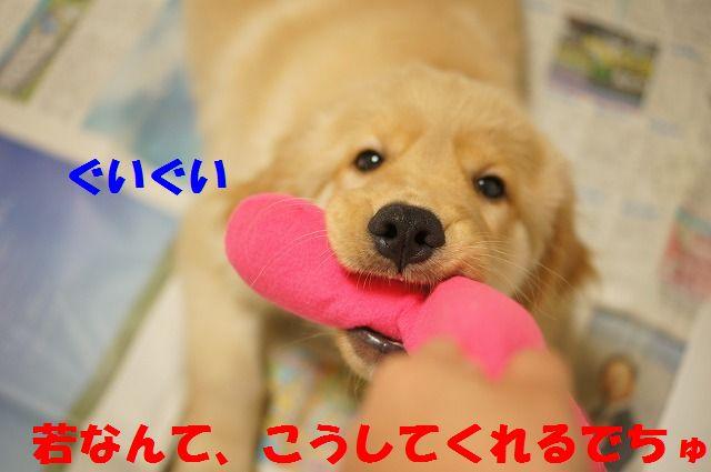 7_20120121224328.jpg