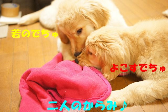 7_20120123221750.jpg