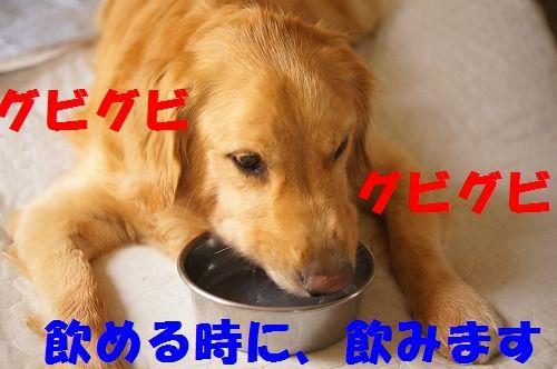8_20111123224949.jpg
