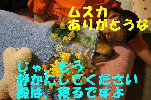 8_20111124224257.jpg