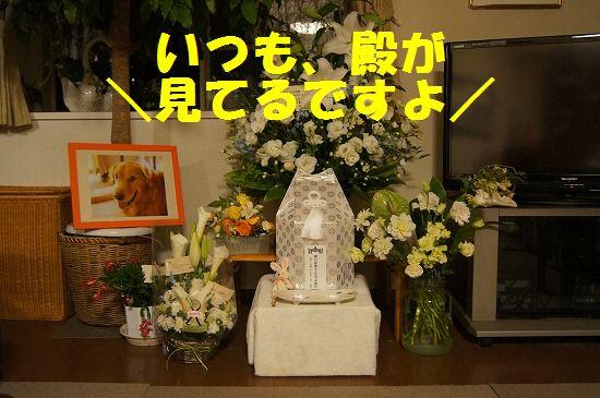 8_20111125222216.jpg