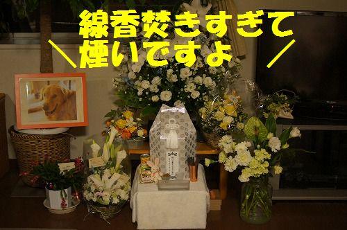 8_20111126195009.jpg