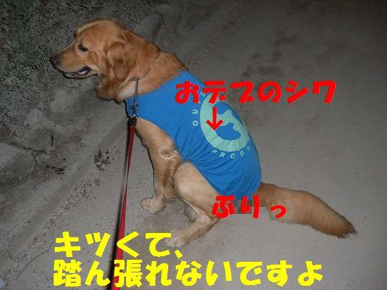 8_20111209203453.jpg